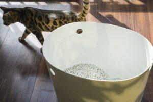 猫砂 トイレ